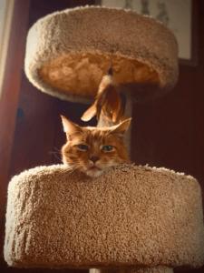 Description: Offrez un endroit sûr pour votre chat grâce à votre arbre à chat! Source: Erica Marsland Huynh, unsplash