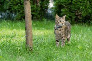 Le tracker permet de géolocaliser jusqu'à 4 animaux de compagnie dans un rayon de 500 m. Une fonctionnalité qui a su convaincre les avis des utilisateurs lors de leurs tests.