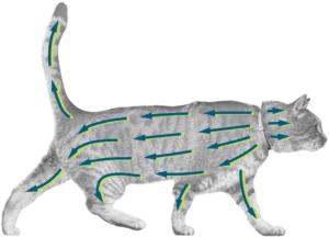 Chez les chats traitement et prévention des infestations par les puces pendant 7 à 8 mois. Le médicament protège l'environnement immédiat de l'animal contre le développement de larves de puces pendant 10 semaines. Faites le test!