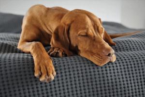 Pour le confort de votre chien, misez sur une matière anti-dérapante qui facilite son positionnement dans le panier.