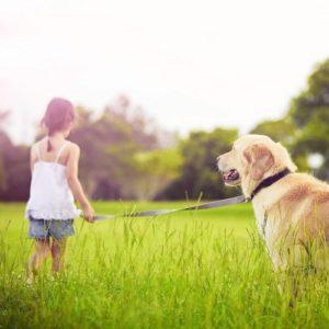Cette laisse pour chien multiposition est idéale pour les programmes d'éducation des chiens de taille moyenne et grandes. Une option qui a su convaincre les avis des utilisateurs lors de leurs tests.