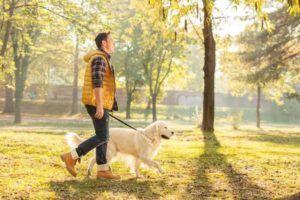 La laisse pour chien se compose d'une lanière, une corde ou une chaîne, avec un crochet métallique à une extrémité qui se lie au collier ou au harnais du chien.