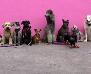 Il existe aujourd'hui sur le marché de nombreux types de poussettes pour chiens, choisissez le modèle que vous préférez pour votre animal.