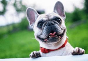 Les répulsifs pour chiens peuvent vous aider à tenir des chiens indésirables éloignés de votre propriété.