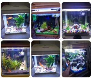 Comme vous pouvez le voir sur ces photos de clients, cet aquarium peut être aménagé de plusieurs façons.