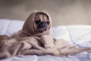 L'achat d'un bon panier pour chien est très important pour son bien-être à la maison.