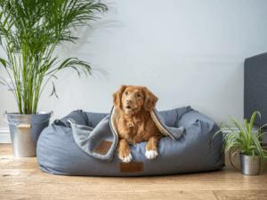 Une niche pour chien, avec clôtures, est très facile d'installation, et simple d'utilisation pour l'animal.