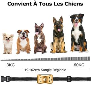 Ce collier anti-aboiement a trois niveaux et est donc adapté pour tout type de chien, selon notre test.