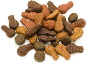 Le système digestif du chat est programmé pour effectuer de petites digestions plusieurs fois par jour d'après l'avis des experts.