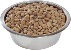Les chiens ont besoin de manger à une heure fixe et de maintenir une routine stable.