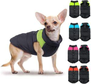 un manteau pour chien pour les petits animaux