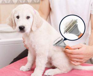 Cette brosse convient à toutes les races de chien