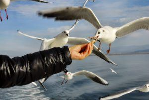 Un homme qui donne à manger à des oiseaux