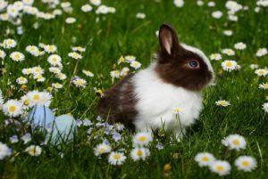 Un lapin en bonne santé dans un jardin de fleur