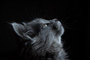 Un chat qui regarde en l'air