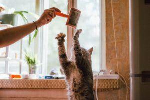Un chat qui joue avec sa brosse