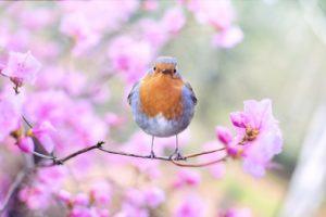 Vous pourrez attirer les plus beaux spécimens avec une mangeoire pour oiseaux
